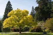 Botanische tuin in Dunedin
