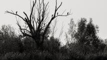 Arnoud-Raeven-_MG_5228_web