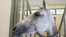 Meydan stal, met duur paard.