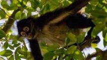 028 - @ Tikal