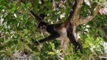 029 - @ Tikal