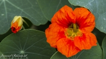 Bloemen in de tuin bij Devi\'s falls