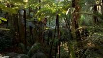 Wandeling door het Waipoua Kauri Forest