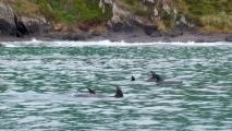 Een school dolfijnen