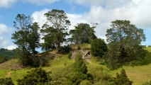 Nieuw-Zeelandse bomen op een heuvel