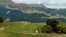 Nieuw-Zeelands landschap onderweg naar Napier