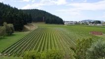 Wijngaard bij wijnhuis