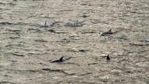 Wéér dolfijnen!