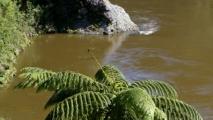 Eenzame palm varen langs een rivier