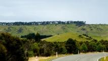 Bomen bovenop een heuvel