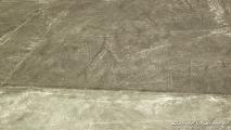 Nasca lijnen: De pelikaan