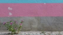 Plantje bij een deels gekleurde muur